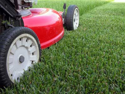 Yard services include lawn mowing