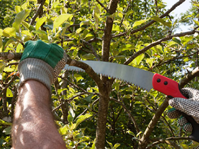 Yard services include tree and shrub pruning